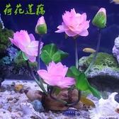 仿真荷花蓮藕魚缸裝飾造景仿真水草加花草塑料水草絹布蓮花荷花紅 深藏blue