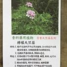 花花世界_香草植物--檸檬天竺葵--(香氣濃烈)/5吋盆/高20-30CM/TC