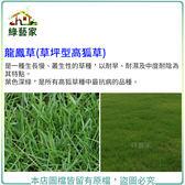 【綠藝家】大包裝M13 龍鳳草種子350 克草坪型高狐草