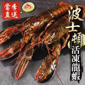 【獨家進口】當季活凍波士頓大龍蝦 1隻組(500g±10%/隻)