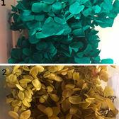 永生花花材,安娜,大葉,木繡球新色上架,一份2克