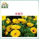 【綠藝家】H19.金盞花(黃色,高20~...