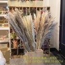 進口乾燥大浦葦 大蘆葦 -網美拍照 店面裝飾佈置 乾燥花 拍照道具 室內擺飾 -238元/枝