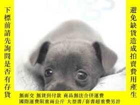 二手書博民逛書店101罕見ADORABLE BREEDA DOGS【精裝版、銅版