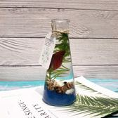 斗魚活體生態瓶魚活體免換水族免打理斗魚缸桌面迷你微景觀造景 雙12購物節