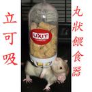 立可吸- CFH-1自動餵食瓶 飼料餵食器 寵物餵食器 鼠類小動物用品   美國寵物第一品牌LIXIT®