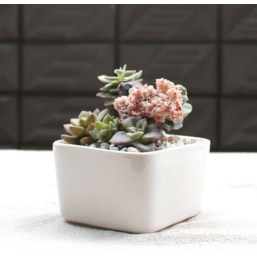 CARMO純白正方形陶瓷多肉花盆【BI18001】