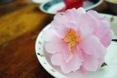 【e卡農場玩樂趣】新北市《茶花莊農場》茶花種植DIY/養生茶/野薑花茶/-1日遊單人兌換券