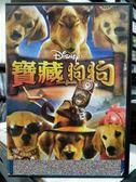 影音專賣店-Y32-061-正版DVD-動畫【寶藏狗狗】-迪士尼 國英語發音