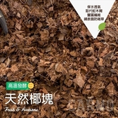 CARMO斯里蘭卡椰塊(1L) 椰纖塊 介質 泥炭 蘭花 氣根推薦【C002044】