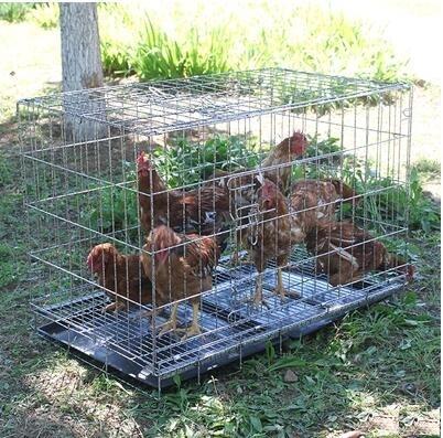 雞窩雞舍雞籠子養雞籠子養殖家用大號折疊母雞籠子 i萬客居