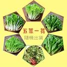 【日燦】在地優農蔬菜箱---隨機出貨六種(五包葉菜+一包芽菜)419元(免運喔~)