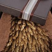 原色大麥穗花束天然植物干花麥子開業慶典送禮佳品風干大麥花禮物yi【販衣小築】