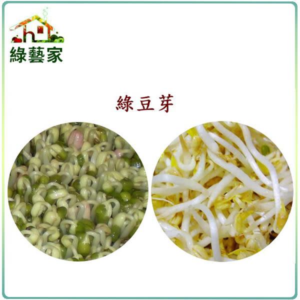 【綠藝家】大包裝綠豆芽種子500公克(綠豆芽菜種子)