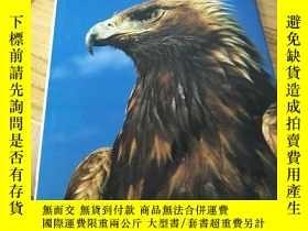 二手書博民逛書店BIRDS罕見OF PREY 《外文書,以圖片爲準》Y12820