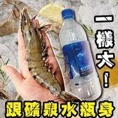 670元起【WANG-全省免運】比臉大深海鮮美肥豬蝦X1包(350g~400g±10%/包)