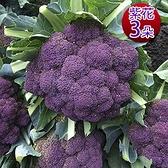 預購1/10出貨【鮮採家】雲林產地直送軟嫩帶葉紫花椰菜3朵(單顆約525±10%)