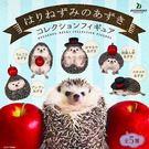全套5款【日本正版】可愛刺蝟 AZUKI...