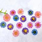 針菊,金針菊滴膠,乾花DIY,混色16朵。4色各4