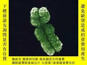 二手書博民逛書店Genetics:罕見Principles And Analysis(fourth Edition)-遺傳學:原理