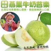 【小農直配】燕巢牛奶珍珠芭樂 x5台斤±10%/(1箱/約8-12顆)