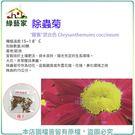 【綠藝家】H50.除蟲菊種子80顆...