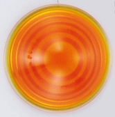 Starlight方向燈殼(217-4080)