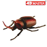【4D MASTER】立體拼組模型昆蟲系列-日本獨角仙/犀牛甲蟲 26570/20183C