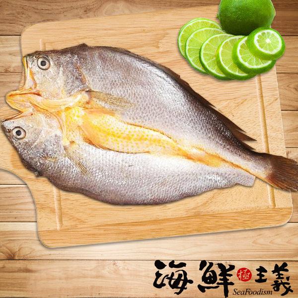 【海鮮主義】黃魚一夜干(240g/尾)