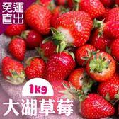 預購 -家購網嚴選 大湖草莓 (2~3號果) 產地現採 低溫配送1Kg/盒【免運直出】