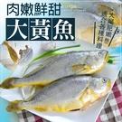 【大口市集】媽媽的最愛 巨無霸肥美鮮嫩大黃魚(750g±10%/尾)