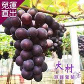 水果達人 大村巨峰套袋葡萄-1盒(5-8串/盒)【免運直出】