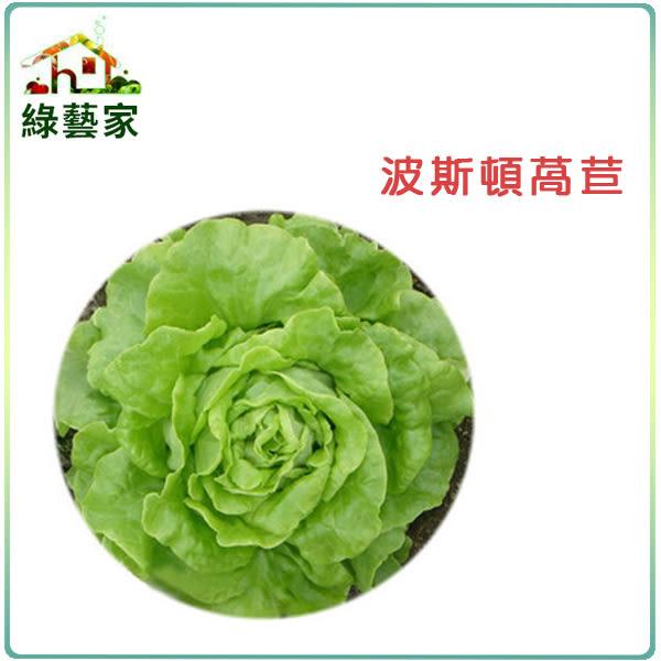 【綠藝家】大包裝A21.波斯頓萵苣種子30克