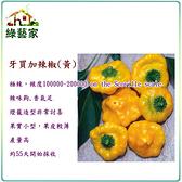 【綠藝家】大包裝G45.牙買加辣椒(黃,極辣)種子80顆