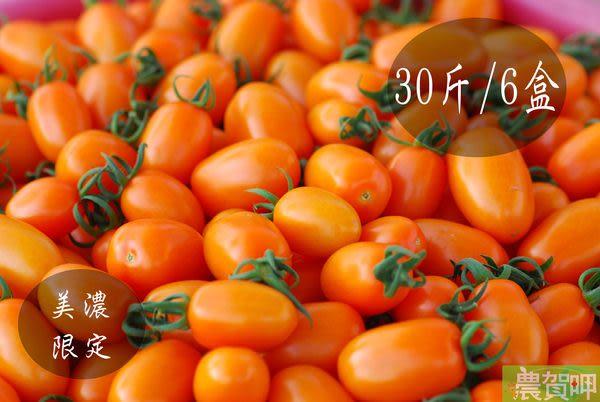 [有現貨]美濃橙蜜香小蕃茄30斤 免運 安全  水果禮盒