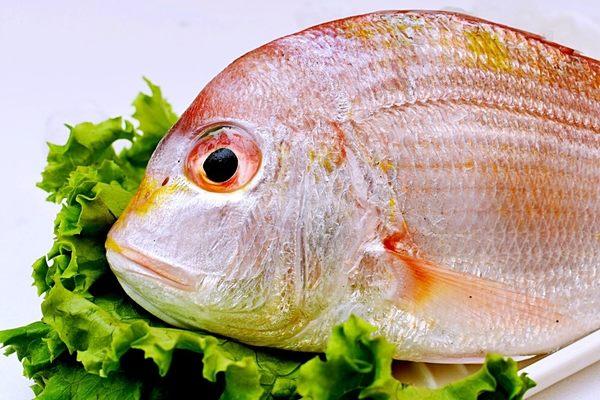 *【中川現流鮮海魚】㊣基隆野生現流赤鯮魚(兩尾裝約300g)