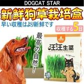 【🐱🐶培菓寵物48H出貨🐰🐹】汪喵星球》天然ㄟ尚好新鮮狗草栽培盒-3盒/組
