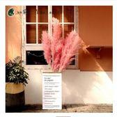 ins粉色蘆葦干花花束大蘆葦蒲葦干花裝飾風干客廳落地家居擺設 露露日記