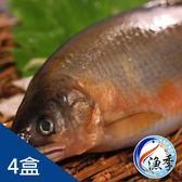 【漁季】外銷版爆卵母香魚*4盒(920g±10%/盒)