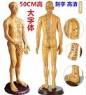 中醫針灸穴位圖人體模型50cm男女模型清晰經絡小人體針灸穴位模型