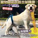 【 培菓平價寵物網 】Doglemi》高齡犬步行後腿輔助帶S/M/L/XL號