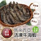 【屏聚美食】馬來西亞-活凍牛海蝦(1KG/20-25尾)
