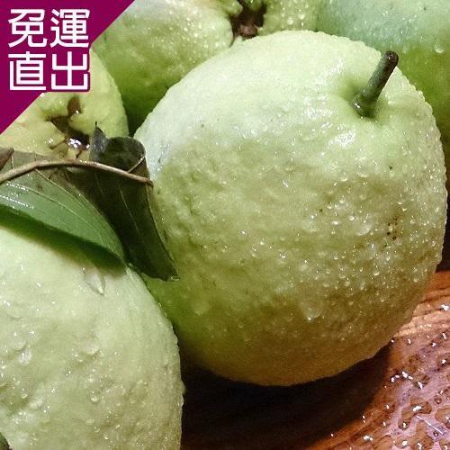 綠安生活 綠安生活燕巢牛奶珍珠芭樂1盒(5斤/盒/8-11粒)【免運直出】