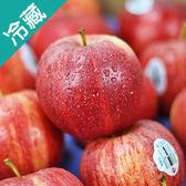 紐西蘭加拉蘋果120粒/箱 (120g±5%/粒)【愛買冷藏】