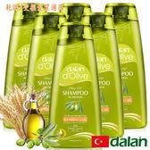 【土耳其dalan】橄欖油小麥蛋白修護洗髮露6入組(50mlX6)