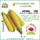 【綠藝家】G38.美粒甜超甜玉米種子3.5克(約20顆)