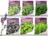 【FC410】各種香草種子:紫葉羅勒/歐芹/黃金菊/神香草/紫蘇★EZGO商城★