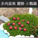 [拉拉百貨]多肉 盆栽擺飾 小瓢蟲 景觀造景 微景觀 20入一組