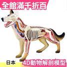 【NO.18 狗】日版 青島文化教材社 AOSHIMA 4D立體拼圖 解剖模型 動物解剖【小福部屋】