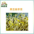 【綠藝家】J14.黑芝麻芽(芽菜種子)種子3000顆